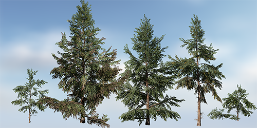 Spruce_white_store_s.png